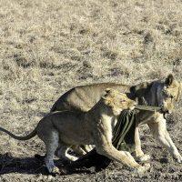 My Africa through the Lens of Joe Witkowski