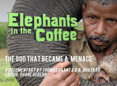 Image result for elephants in the coffee