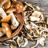 Fungi & Fermentation