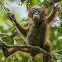 Cheryl Knott and Tim Laman - Adventures Among Orangutans