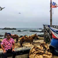 Pablo Sanhueza presents Contemporary Chilean New Song & Andean Folk/Rock Electronica presented by Folk Alliance International at ,