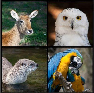 Magical World of Animals