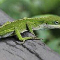 Wildlife Detectives: Spotlight on Reptiles and Amphibians