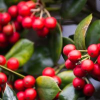 Holiday Home Decor: Holiday Container Design presented by Powell Gardens at ,