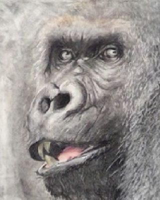 Drawing the Wild: Fur, Feathers, & Hairy Things presented by Images Art Gallery at ,